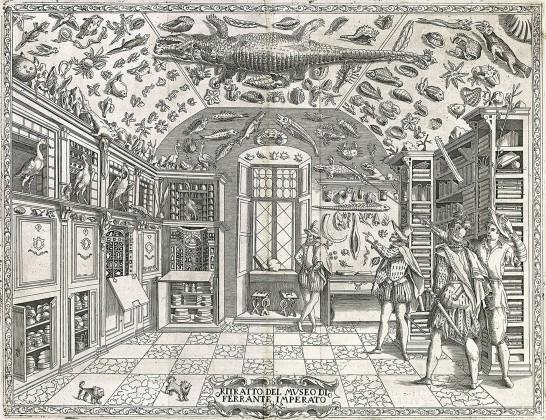 Ferranto Imperato'nun Doğa Tarihi gravürü, Napoli, 1599